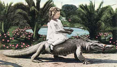 Joy_Riding_California_Alligator_Farm