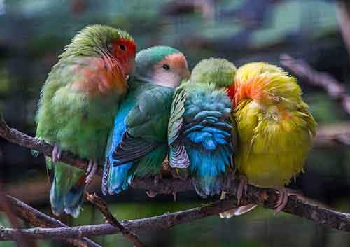http://mixstuff.ru/wp-content/uploads/2015/08/birds-keep-warm-bird-huddles-23__880.jpg