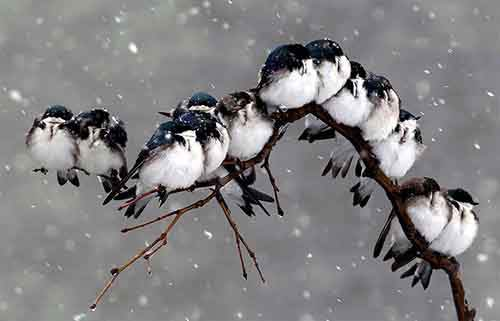 http://mixstuff.ru/wp-content/uploads/2015/08/birds-keep-warm-bird-huddles-4__880.jpg