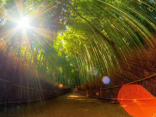 why-kyoto-was-chosen-as-the-best-city-in-the-world-23-photo-proofs-artnaz-com-13