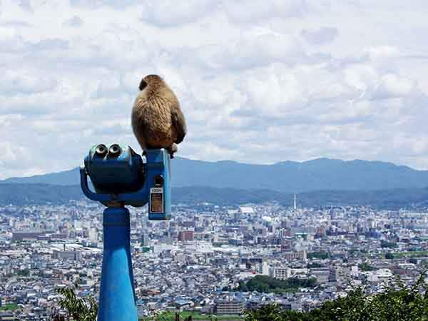 why-kyoto-was-chosen-as-the-best-city-in-the-world-23-photo-proofs-artnaz-com-14