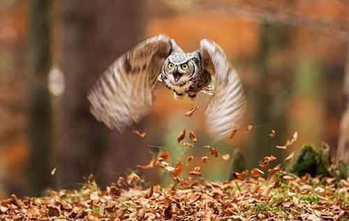 15-animals-who-enjoy-the-magic-of-the-autumn-artnaz-com-11