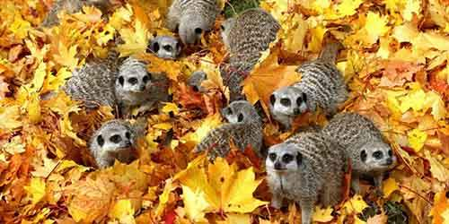 15-animals-who-enjoy-the-magic-of-the-autumn-artnaz-com-13