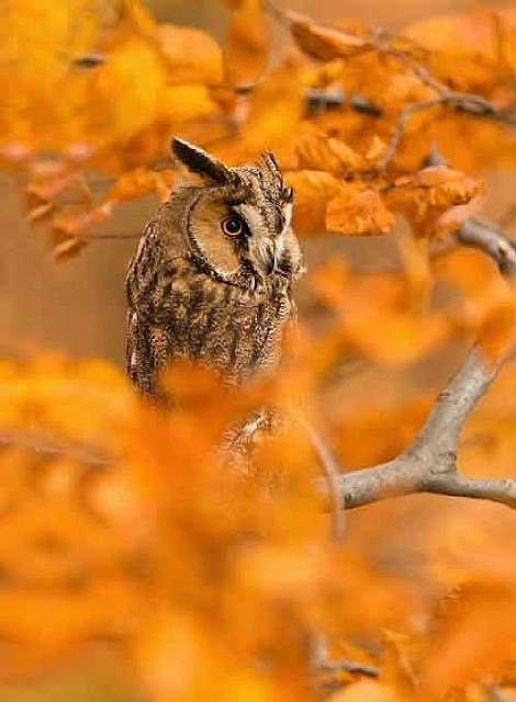 15-animals-who-enjoy-the-magic-of-the-autumn-artnaz-com-14