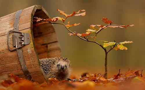 15-animals-who-enjoy-the-magic-of-the-autumn-artnaz-com-2