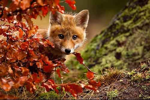 15-animals-who-enjoy-the-magic-of-the-autumn-artnaz-com-3