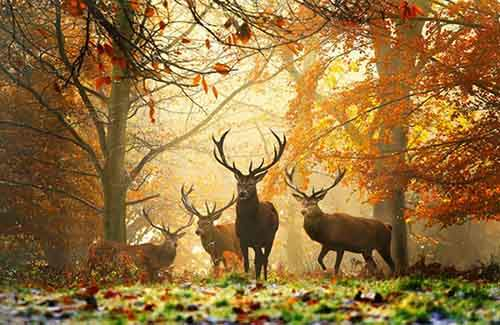 15-animals-who-enjoy-the-magic-of-the-autumn-artnaz-com-4