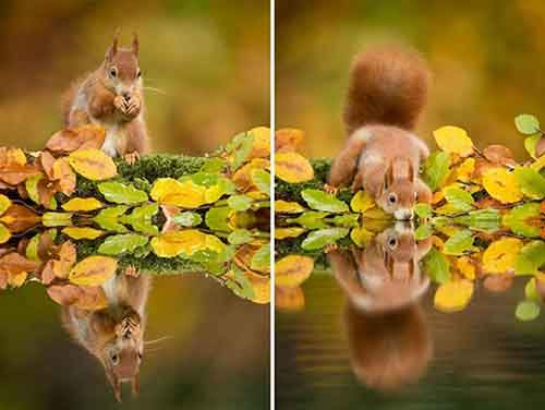 15-animals-who-enjoy-the-magic-of-the-autumn-artnaz-com-5