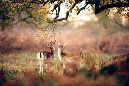 15-animals-who-enjoy-the-magic-of-the-autumn-artnaz-com-7