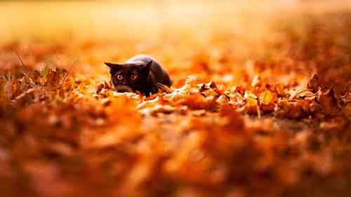 15-animals-who-enjoy-the-magic-of-the-autumn-artnaz-com-8