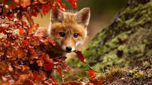 15-animals-who-enjoy-the-magic-of-the-autumn