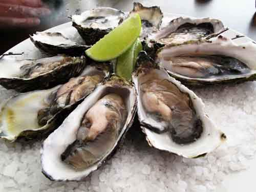 Pacific_oysters-610x458