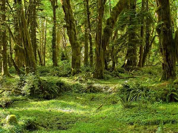 throughout-the-nearly-million-acres-of-olympic-national-park-washington-are-glacial-mountains-cliff-lined-beaches-and-rainforests-such-as-the-hall-of-mosses