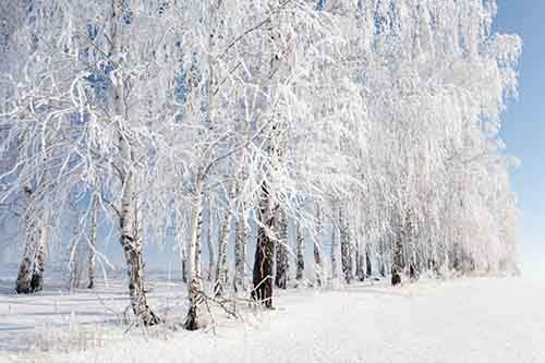 16-pictures-showing-that-winter-is-a-masterpiece-artnaz-com-2