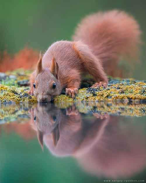 best-of-national-geographic-october-2015-18