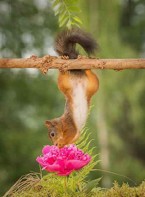 i-shoot-squirrels-in-my-backyard-and-i-can-almost-make-a-living-from-what-i-love-2__880