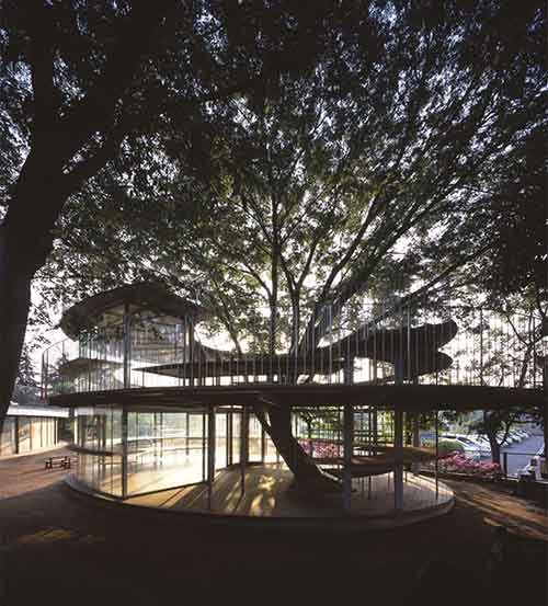 kindergarten-around-tree-zelkova-fuji-tezuka-architects-34