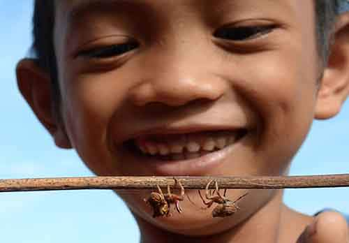 This photo taken on November 2, 2015 shows a child watching spiders fight - a local children's pastime - in Tacloban City, Leyte province, central Philippines, two years after typhoon Haiyan devastated the city. The local pastime is played by placing two spiders on opposing ends of a stick, with the intention that the two arachnids will battle each other. The winning spider is declared when its opponent drops off the stick or runs away. AFP PHOTO / TED ALJIBE (Photo credit should read TED ALJIBE/AFP/Getty Images)
