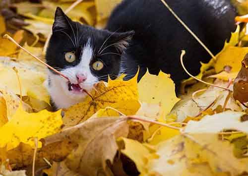 A cat plays with leaves in autumnal colors on November 1, 2015 in Sieversdorf, northeastern Germany. AFP PHOTO / DPA / PATRICK PLEUL +++ GERMANY OUT +++ (Photo credit should read PATRICK PLEUL/AFP/Getty Images)