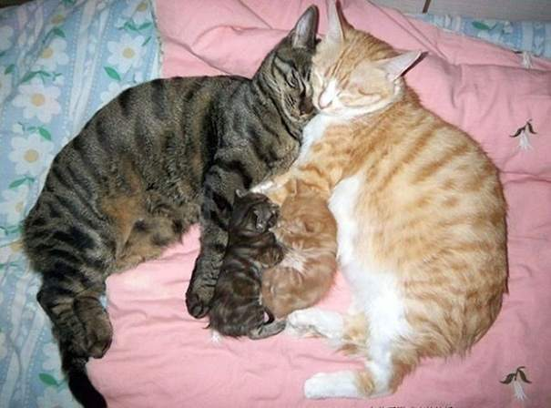 proud-cat-mommies-49__605