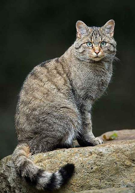 unusual-wild-cats-37__880