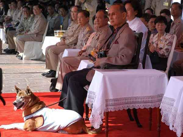 King Bhumibol Adulyadej of Thailand and the dog he rescued from an alley, Tongdaeng, at a boat race in 2008