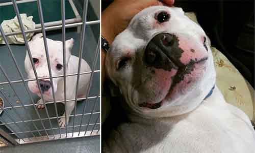 before-and-after-photos-of-adopted-dogs-1