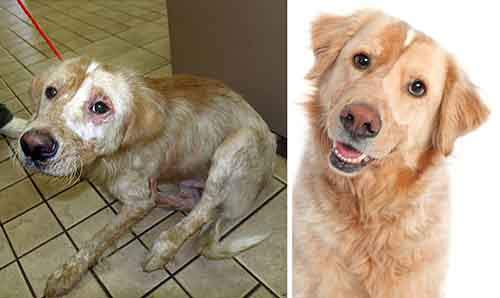 before-and-after-photos-of-adopted-dogs-3