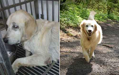 before-and-after-photos-of-adopted-dogs-5