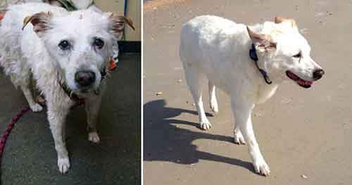 before-and-after-photos-of-adopted-dogs-6