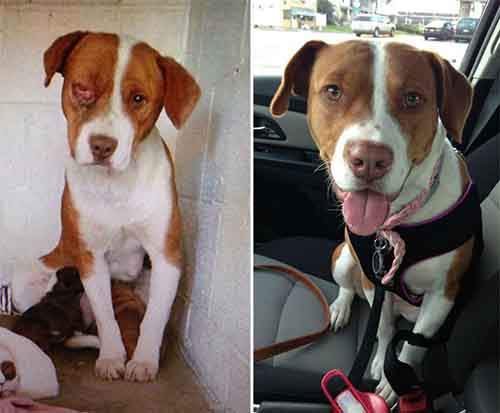 before-and-after-photos-of-adopted-dogs-9