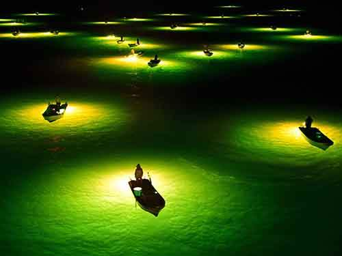 Tokushima, Japan. Fishermen scoop approximately 5 centimetres young eels which gather to lamps. Eels are collected and raised as farming facilities