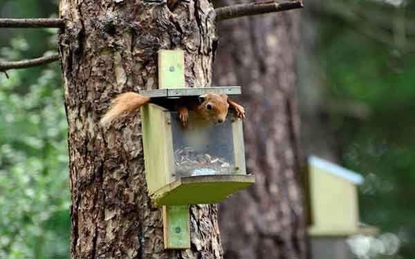 funny-squirrel_3413153k