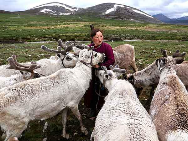 Tsaatan people, reindeer herders tribes, live in the forest near Khovsgol lake, Northern Mongolia. Meeting them after several days of horseriding through the desertic taÔga and snow at times was unforgettable. Picture taken in 2014.