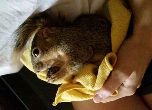 rescued-squirrel-christmas-tree-3
