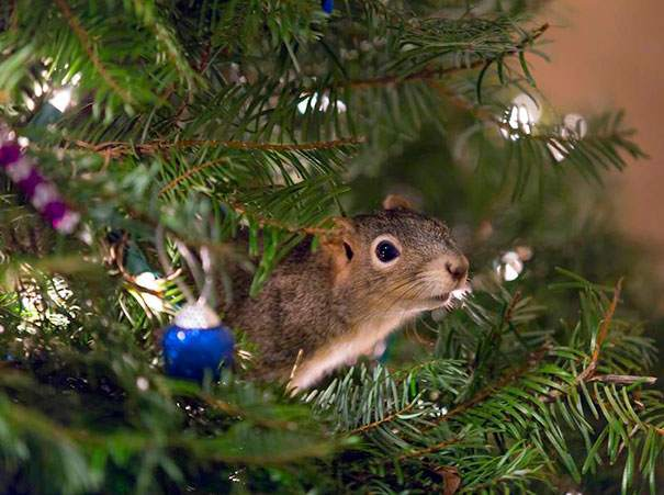 rescued-squirrel-christmas-tree-4