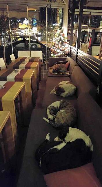 stray-dogs-sleep-cafe-hot-spot-lesbos-greece-11