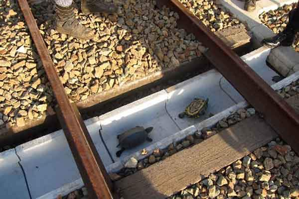 turtle-tunnel-train-track-safety-japan-railways-1