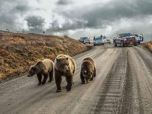 bear-road-denali_93621_990x742
