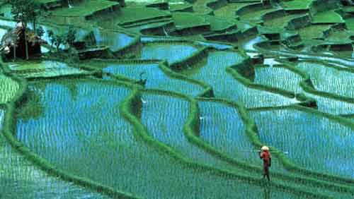 beautiful_terraced_rice_fields