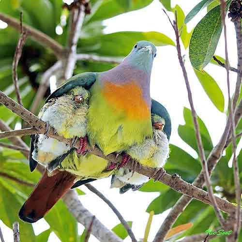 cute-bird-parents__700