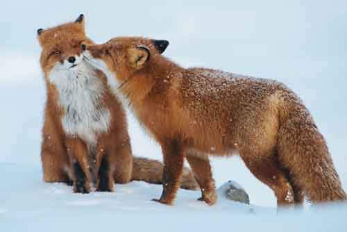 cute-animals-kissing-valentines-day-11__880