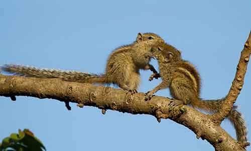 cute-animals-kissing-valentines-day-16__880