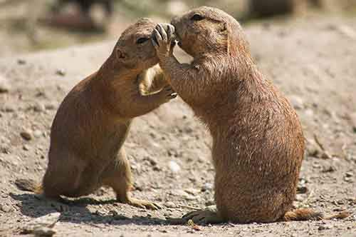 cute-animals-kissing-valentines-day-43__880