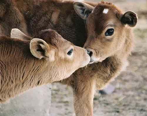 cute-animals-kissing-valentines-day-48__880
