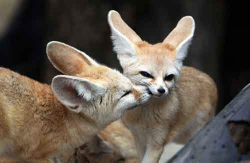 cute-animals-kissing-valentines-day-55__880