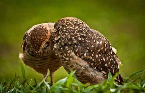 cute-animals-kissing-valentines-day-581__880
