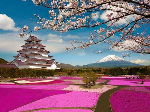 12-magical-pictures-Sakura-Blossom-in-Japan-in-2016-Part-1-Artnaz-Com-1