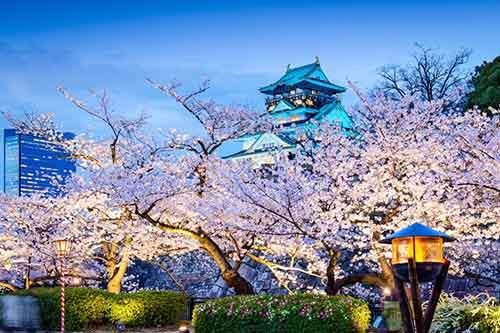 12-magical-pictures-Sakura-Blossom-in-Japan-in-2016-Part-1-Artnaz-Com-10
