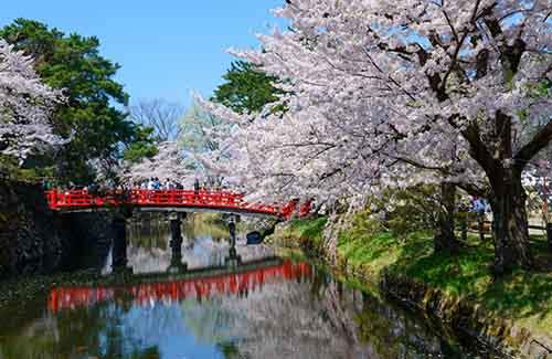 12-magical-pictures-Sakura-Blossom-in-Japan-in-2016-Part-1-Artnaz-Com-12